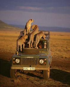 on safari in Kenya
