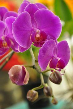 As inscrições para a 40ª edição do Curso de Cultivo de Orquídeas seguem até 29 de fevereiro (segunda-feira) e podem ser realizadas por telefone ou pessoalmente no Parque Previdência, na zona oeste de São Paulo...