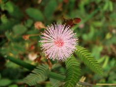 List of beneficial weeds