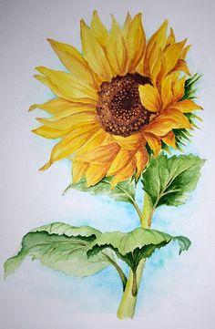 Sunflower Drawing, Sunflower Art, Watercolor Sunflower, Watercolor Flowers, Watercolor Paintings, Sunflower Paintings, Paintings Of Sunflowers, Sunflower Images, Aquarell Tattoos