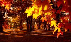 Sun Bathed   Flickr - Photo Sharing!