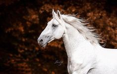 Wow •• ✨ Photography by: @elianevanschaikphotography •• Tag your horse photos to #bestofequines or #boeunder3k (for under 3k followers only) for a chance to be featured!