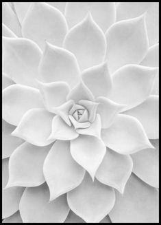 Succulent - Shop this print at Poster Store Black And White Picture Wall, Black And White Posters, Black And White Aesthetic, Black And White Prints, Black And White Pictures, Poster Xxl, Poster Shop, Mode Poster, Collage Mural