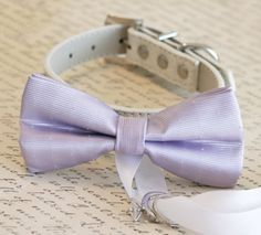 bow tie collar with ring ribbon