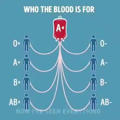Blood Type Chart, Different Blood Types, Blood Groups, Blood Donation, Useful Life Hacks, Things To Know, Good To Know, Fun Facts, Crazy Facts