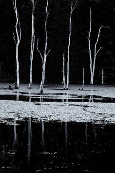 ✯ North Pond Twilight