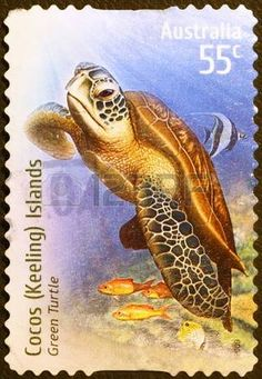 turtle postage stamp: Green turtle on australian postage stamp