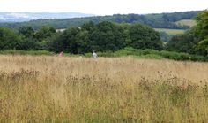 https://flic.kr/p/x3TGKM   Kentish Weald @ Emmetts   Lovely view of the kentish weald from the meadow area at emmetts nt kent -  www.adamswaine.co.uk