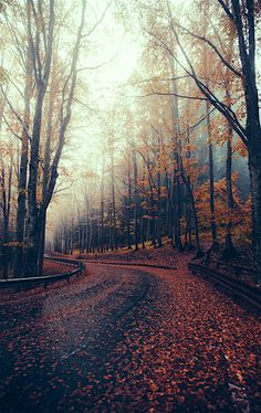 """~ Autumn ~ """"Light and Mist and Dead Leaves"""" by Elena Morelli"""