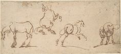 Jacques Callot (French, 1592–1635). Four Studies of Horses, 16th century. The Metropolitan Museum of Art, New York. Anonymous Gift, 1996 (1996.511)
