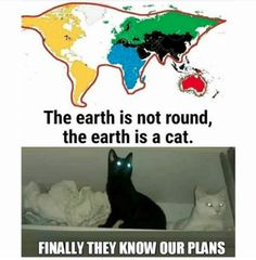The Cats Will Take Over