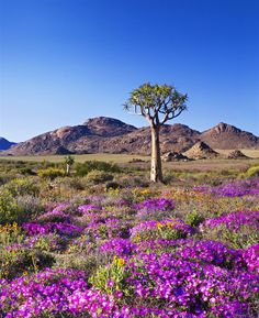 Goegap Nature Reserve – Experience the Northern Cape, South Africa Marrakesh, Terre Nature, Beautiful World, Beautiful Places, Champs, Foto Picture, Africa Travel, Kerala Travel, Nature Reserve