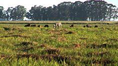Produção animal com consciência ambiental. Realização: Fundo Vale, Dow AgroSciences e Sindicato dos Produtores Rurais de Paragominas.