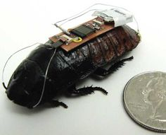 COCKROACHES STRAPPED WITH STEERING WHEELS..........just a bit on the odd side. Could this save a life?