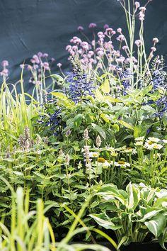 Hoe is de biodiversiteit in jouw tuin? Doe de test op onze website en ontdek wat jij nog kan bijdragen in jouw tuin! Website, Plants, Plant, Planting, Planets