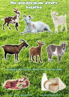 Úloha - Na gazdovskom dvore - farebná predloha LICENCIA Science Art, Science And Nature, Farm Animals, Animals And Pets, Lamb, Goats, School, Creative, Blue Prints