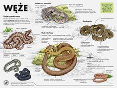 Polish Language, Life Is Strange, Hand Lettering, Education, Animals, Lasy, Survival, Geography, School