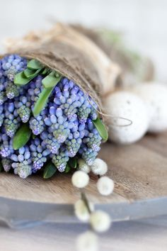 muscari...or other forced bulb flowers & pods wrapped in burlap & jute...adorable...