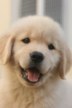 Cute Dogs And Puppies Wallpaper Super Cute Puppies, Cute Baby Dogs, Cute Little Puppies, Cute Dogs And Puppies, Cute Little Animals, Cute Funny Animals, Funny Dogs, Doggies, Funniest Animals