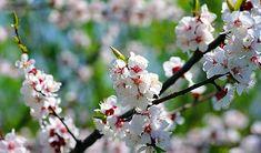 obrázek z archivu ireceptar.cz Garden, Plants, Garten, Flora, Plant, Lawn And Garden, Outdoor, Tuin, Gardens