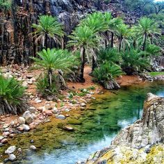 #Socotra island, #Yemen by @a_sawahli The island is very isolated and through the process of speciation, a third of its plant life is found nowhere else on the planet. It has been described as the most alien-looking place on the planet.