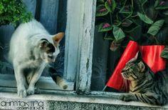 Cats, Animal,Tekirdağ, Peştemalci
