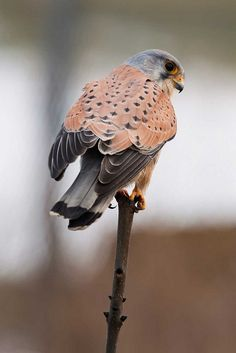 Airport Lookout by Mark Winterbourne | No More Dead Pixels, via Flickr