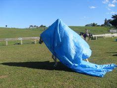 Horse walks with tarp