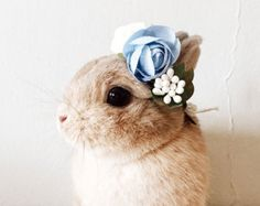 bunny with flower crown - Google Search