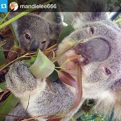 Gold Coast Theme Park | Currumbin Wildlife Sanctuary | 1300 886 511