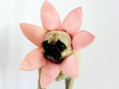 DIYNetwork.com has instructions on how to make a flower Halloween costume for your dog.