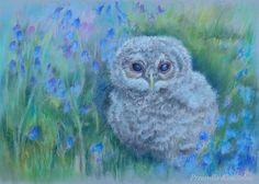 WILDLIFE OWL Original pastel drawing Hand drawn by CanisArtStudio