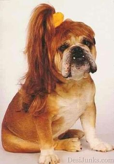 YEAP....you got it right!!! My owner is a Hairstylist!!
