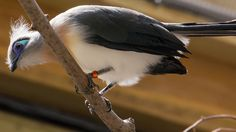 beautiful bird by Matt.Zeglen, via Flickr