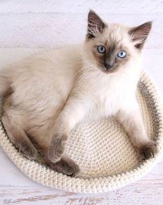 Crochet cat bed pattern sweets 60 New Ideas Diy Cat Bed, Cat House Diy, Diy Dog, Lit Chat Diy, Kittens Cutest, Cats And Kittens, Ragdoll Kittens, Tabby Cats, Funny Kittens