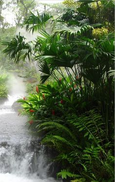 rainforest waterfall of naturalness