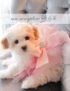 Tulle  Dog Tutu  Puppy Tutu Dog Wedding Tutu