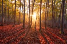 Beautiful Lady Forest by Agustin Rafael Reyes on 500px