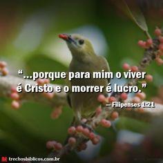 — Filipenses 1-21