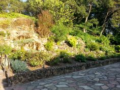 View of back stone patio with well-maintained, sloped garden adjacent.
