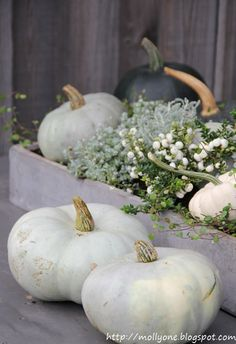 Fall decor: Molly: Baby Boo - my favorite pumpkin Autumn Decorating, Fall Decor, Centerpieces, Table Decorations, Autumn Inspiration, Seasons, Baby, My Favorite Things, Halloween