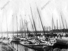 Oyster boats in Washington harbour, 1910