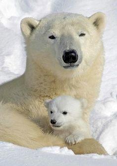 Polar bear babies are adorable!
