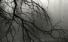 Rain drops on the branches / 1920 x 1200 / Macro / Photography ...