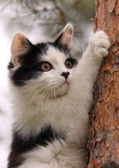 Looks like this kitty is on neighbourhood watch duty !!
