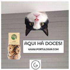 Look! Cookies!  #Portulogia #cookies #biscoitos #azeite
