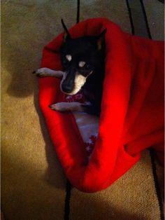 cozy pet sleeping sacks.