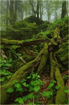 °Dying Forest by Ingrid Lamour Lost In The Woods, Walk In The Woods, Mother Earth, Mother Nature, Mystical Forest, Moss Garden, Old Trees, Forest Garden, Forest Floor