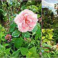 les roses de babette