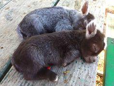 A couple of baby donkeys